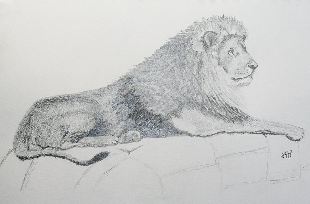 Lion in graphite